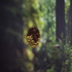 Slide photographiccentreperi haapala 01