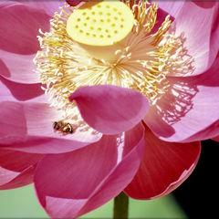 Slide goldenbee sandilands 01